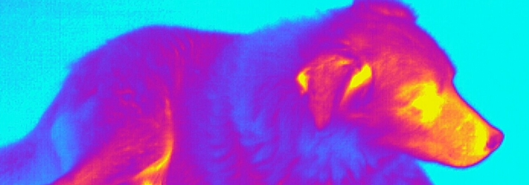 Man's Best Friend in thermal vision
